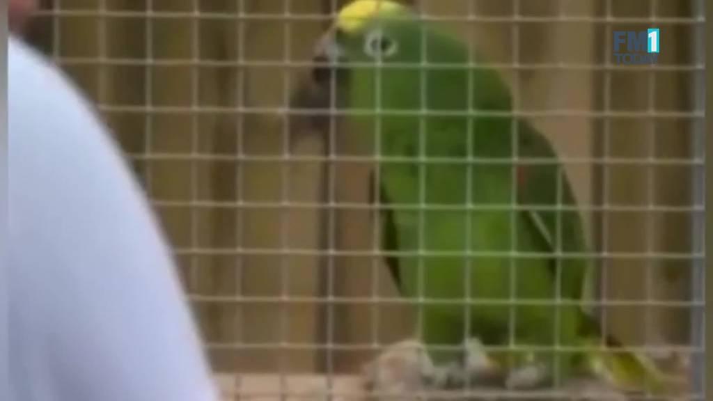Sie fluchen Zoo-Besucher an: Papageien-Gruppe muss getrennt werden