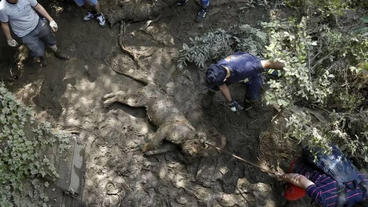 Zahlrieche Tiere sind dem Unwetter zum Opfer gefallen
