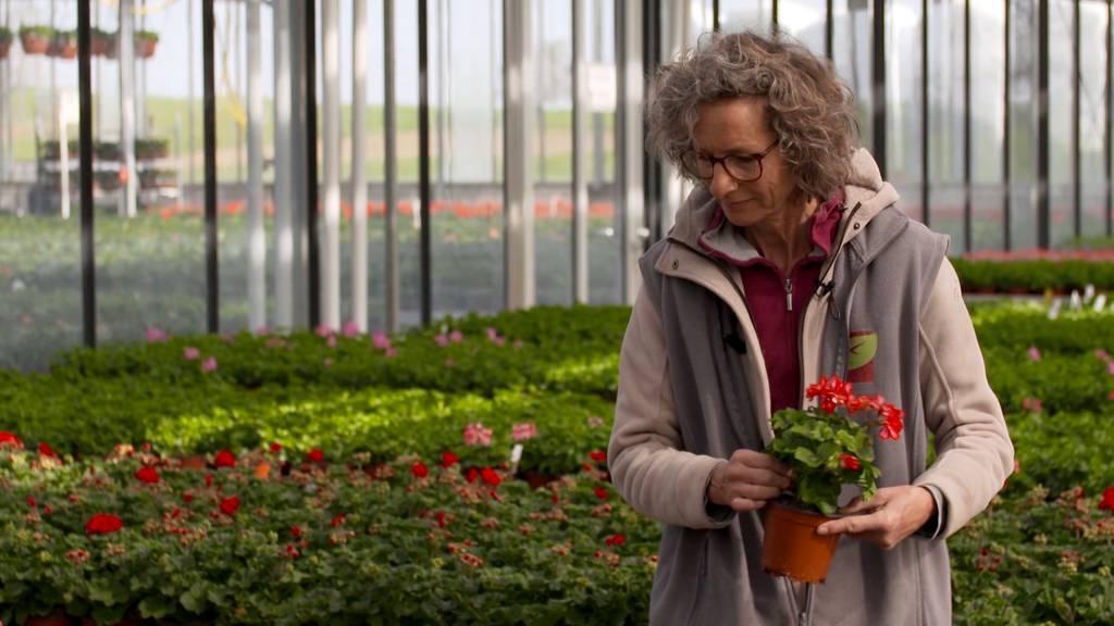 Gärtnereien in der Krise / AQUA-Haus in Zofingen / Ratgeber für Hypotheken