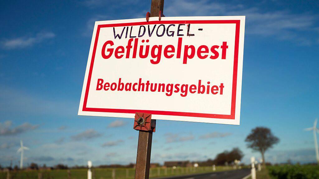Wegen der Vogelgrippe wurden rund um den Bodensee Kontroll- und Beobachtungsgebiete eingerichtet. (Archivbild)