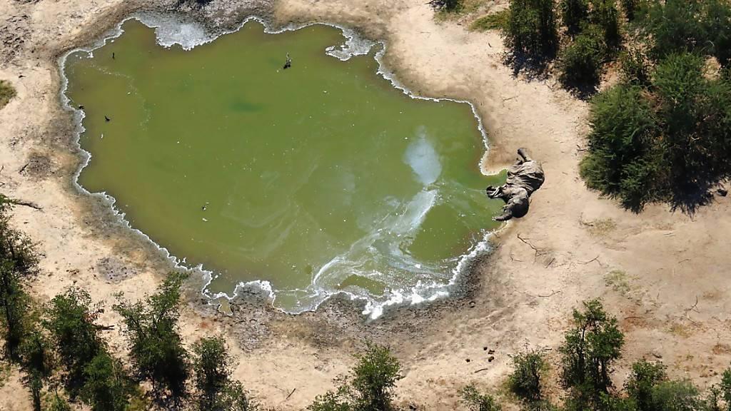 Mysterium am Wasserloch: Massenhafter Elefanten-Tod im Okavango-Delta