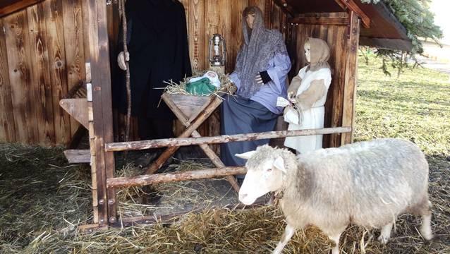 Eindrückliche Darstellung der Geburt Jesu: Krippe am Mosterbach in Gipf-Oberfrick – bevor Vandalen den Zaun beschädigten