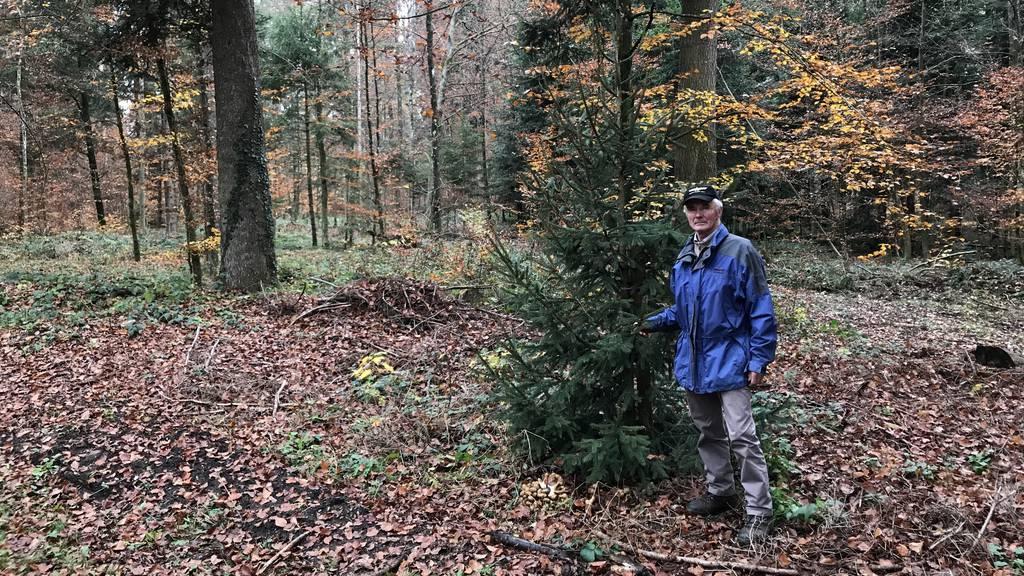Im Zürcher Oberland soll ein ganzer Wald einer Deponie weichen