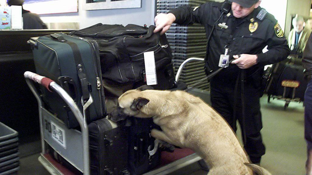 Projekt mit Corona-Spürhunden an Flughafen auf Kurs