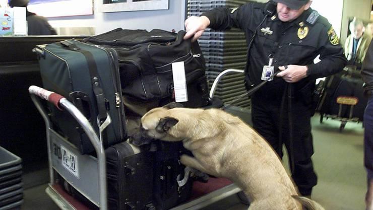 Am Flughafen in Helsinki werden Corona-Spürhunde eingesetzt (Symbolbild)