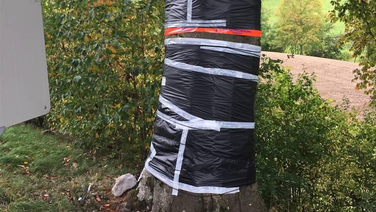 Ein Baum-«Pflaster» für den Winter.