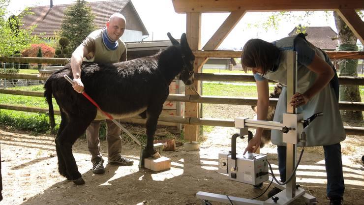 Andre Treier und Lea Hatz können Rockys Hufe neu auch im Stall röntgen.
