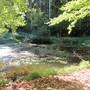 Bürgerweiher Lüsslingen