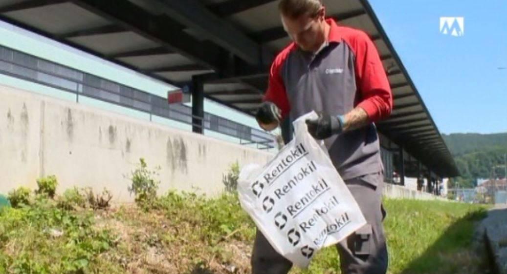 Dieser Mann bekämpft die Rattenplage am Badener Bahnhof