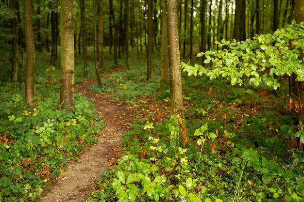 Die Pfade zeugen davon, dass Menschen schon seit vielen Jahren durch den Wald streichen.