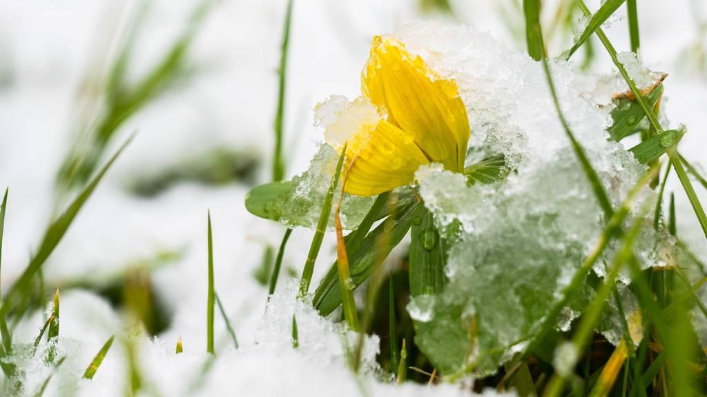 Drei Tage vor Frühlingsanfang herrscht mancherorts Winter
