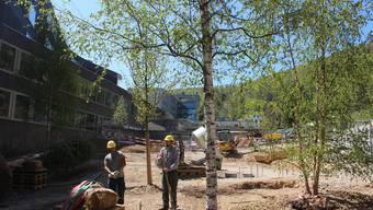 Nach den grossen Bauarbeiten auf der Barmelweid wird nun die Umgebung wieder hergerichtet.