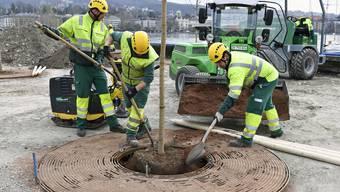 Gitterroste sollen verhindern, dass die Erde um die Jungbäume zu sehr zusammengepresst wird.
