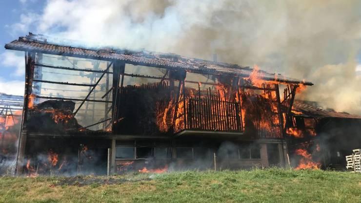 Diese Scheune in Madetswil ZH brannte am Freitag komplett nieder. Die traurige Bilanz: 18 tote junge Stiere und sieben verletzte Personen.