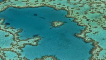Luftansicht eines Teils des Great Barrier Reefs (Archiv)