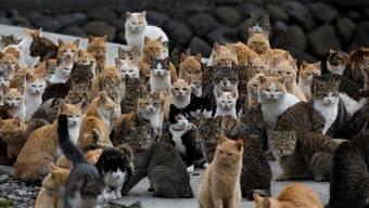 In Inselparadies für Katzen.