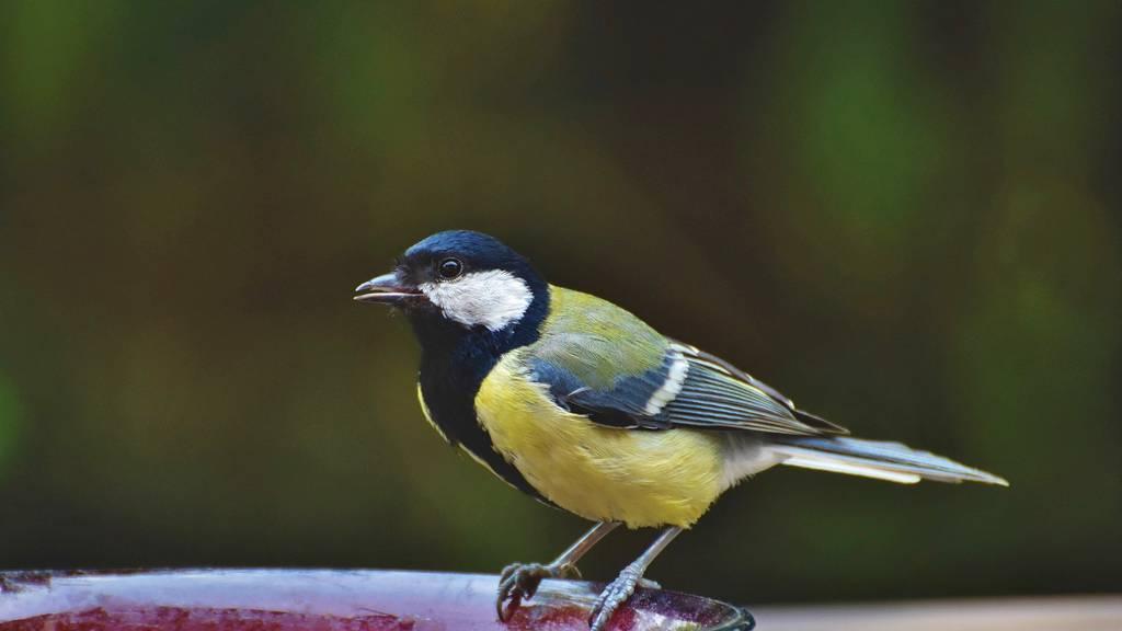 Hilf mit bei der Vogel-Zählung und teste dein Wissen