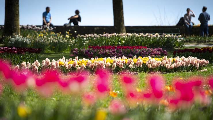 Frühlingsgefühle statt Corona-Blues auch in Morges. (KEYSTONE/Laurent Gillieron)