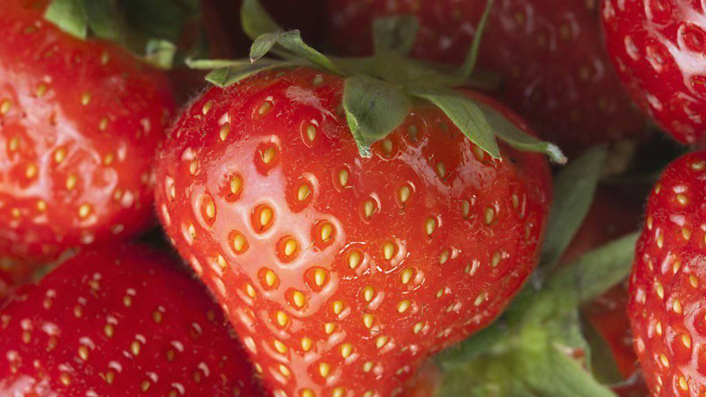 Schweizer Erdbeeren decken rund ein Drittel des gesamten jährlichen Konsums ab. (Archivbild)