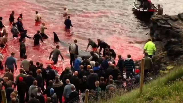 Färöer töten hunderte Wale für den Winter