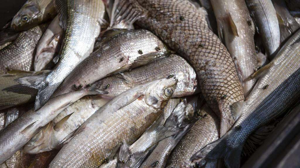Die Gründe für das Fischsterben werden noch ermittelt. (Symbolbild)