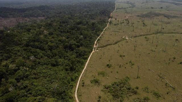 Brasiliens Präsidentin Rousseff legt ihr Veto gegen das Waldgesetz ein (Archiv)