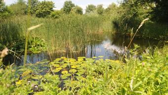 Biotop in Birsfelden.