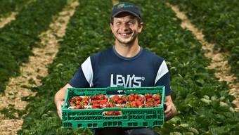 Landwirt Stefan Zubler freut sich über die gute Erdbeerernte.