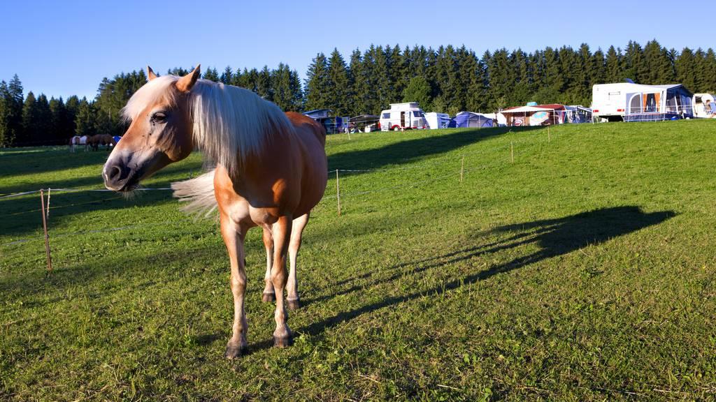 Hustende Pferde wegen Tunnelbaustelle