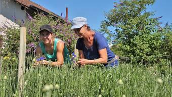 Olivia Oeschger (links) und Tanya van der Laan schneiden auf dem Altfeld Kornblumen aus. Die Pflanzen sind nach Plan gewachsen, nur ein Hagelsturm könnte das blau-weisse Jugendfest noch gefährden. (Janine Gloor)