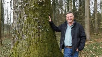 «Ein vitaler Baum wie die Eiche hält dem Borkenkäfer und dem Klimawandel stand», ist Kaspar Reutimann überzeugt. Madeleine Schoder