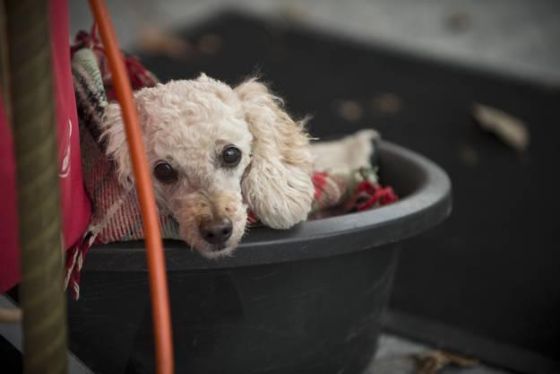 Ein Hund beobachtete warm eingepackt das Markttreiben