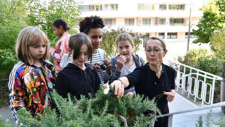 Die Bebbikids dürfen die Kostbarkeiten des Kräutergartens nicht nur anschauen, sondern auch verspeisen.