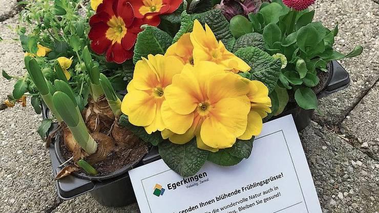 Blumenset für die Haushalte zum Frühlingsanfang.