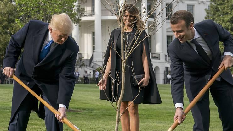 US-Präsident Donald Trump und Frankreichs Staatspräsident Emmanuel Macron pflanzten das Eichenbäumchen im April 2018. (Archivbild)
