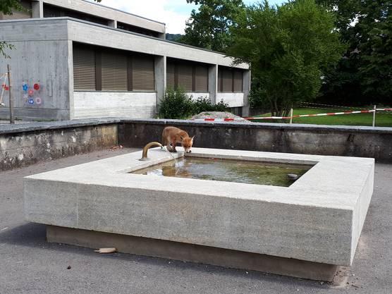 Das Füchslein trinkt auch das Wasser vom Brunnen.