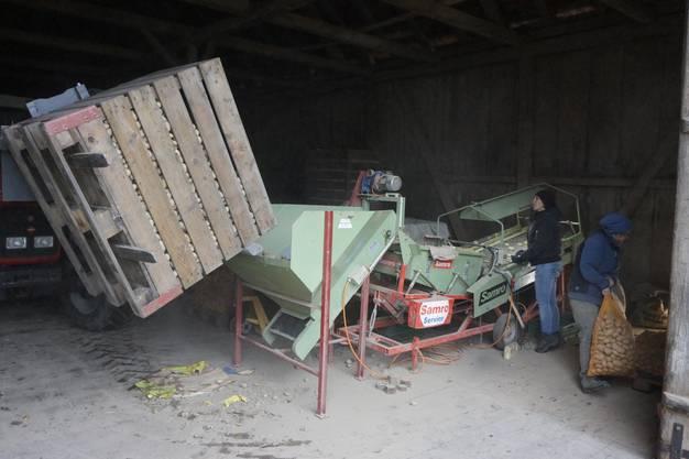 Eine neue Ladung Kartoffeln zum Sortieren wird herangefahren
