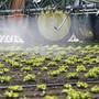 Der Bundesrat hat beschlossen, die Ausfuhr von fünf besonders problematischen Pestiziden ab 2021 zu verbieten. (Symbolbild)