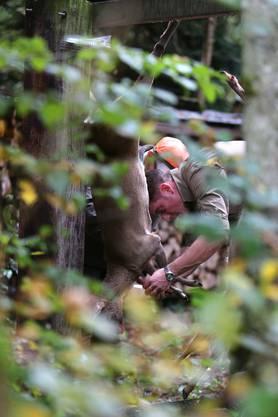 In der Jägersprache bedeutet Wildbret «Wildfleisch von Tieren aus freier Wildbahn». Unter Wild versteht man die jagdbaren Tiere, die frei in der Natur leben. Sie ernähren sich von verschiedenen Kräutern, Knospen, Gräsern, Getreiden, Früchten und Waldbäumen, was für würziges Fleisch als Lebensmittel sorgt. Wild ist regional, saisonal und nachhaltig. (Quelle: Jagd Aargau)