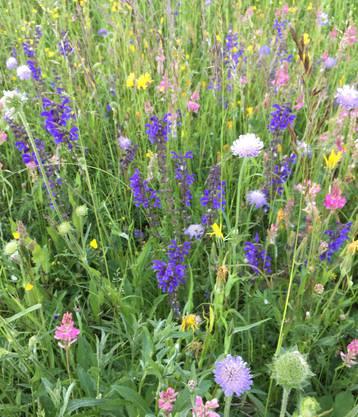 Blumenwiese in voller Blütenpracht