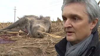 Lukas Berger über das Wildschwein-Drama