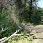 2000 tote Bäume im Hardwald