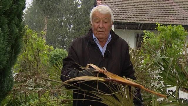 Kopfgeld auf Palmen-Vergifter in Uerkheim ausgesetzt