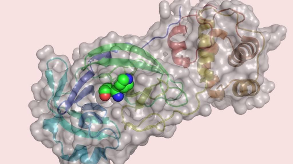 Am Computer haben Basler Forscher über 680 Millionen Wirkstoffe an einem essenziellen Enzym des Virus getestet.