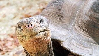 Da staunt die Schildkröte (Symbolbild)
