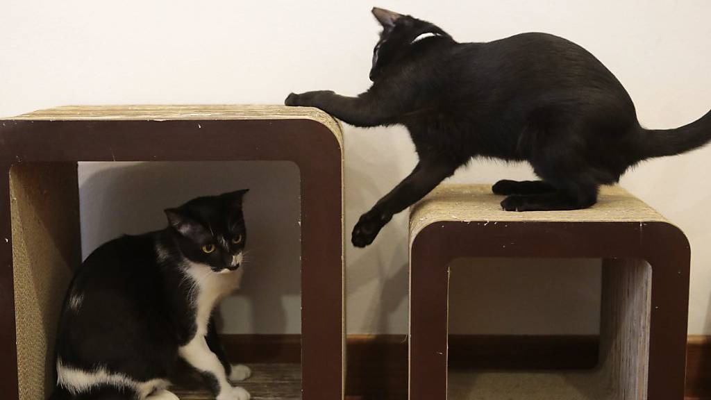 Katzen retten Hausbesitzern bei Erdrutsch das Leben