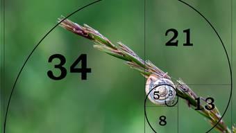 Mathematik in der Natur: Schneckengehäuse beruhen auf der «Fibonacci-Struktur». Jeder Schritt ist die Summe seiner zwei vorhergehenden. Shutterstock