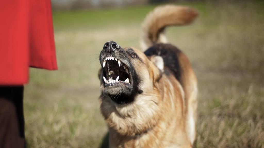 Hund beisst Mann in Genitalien