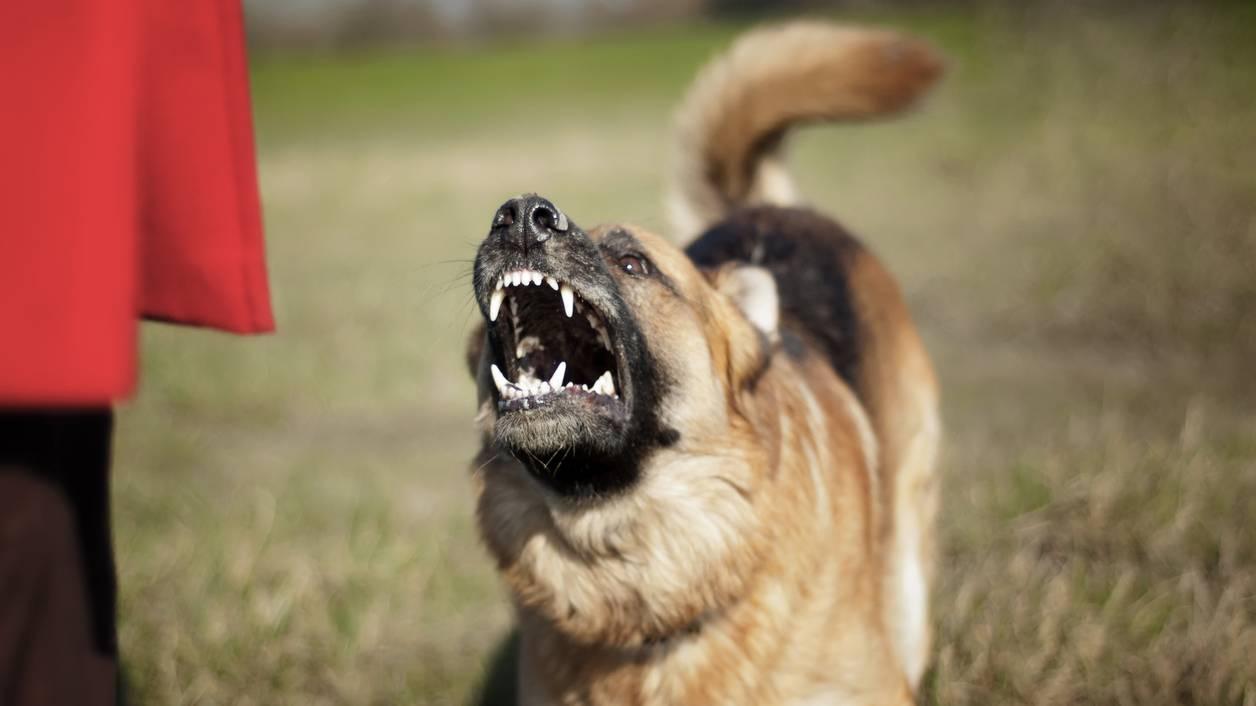 Hund Beißt Mann Genitalien Ab