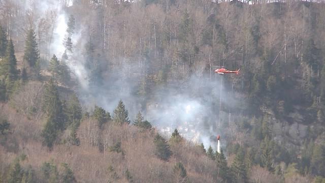 Wie viel kostet ein Waldbrand?